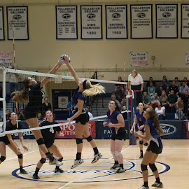 CIF Championship Girls Volleyball Game by Lee Davenport - Sports & Fitness Other Sports