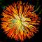 z201_2_3_fused-1_filtered.jpg