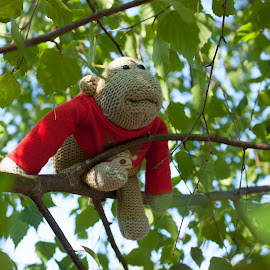 Dreaming of Freedom by Victoria Fyson - Novices Only Objects & Still Life ( pg tips monkey, tree, pg tips, monkey, novelty )