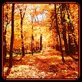 App Autumn Wallpaper APK for Windows Phone