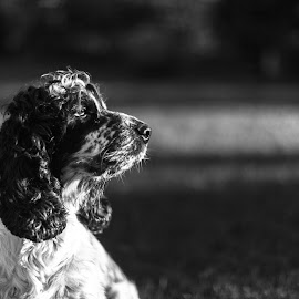 Pinotto by Riccardo Piccotti - Animals - Dogs Portraits ( canon, canon5d, thinking, black and white, dog, portrait,  )