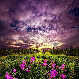 My Whole World Begins and Ends With You by Phil Koch - Landscapes Prairies, Meadows & Fields ( vertical, photograph, farmland, yellow, leaves, storm, love, sky, tree, nature, autumn, shadow, snow, flowers, flower, wind, orange, twilight, agriculture, horizon, portrait, winter, environment, dawn, season, national geographic, serene, trees, floral, inspirational, wisconsin, natural light, phil koch, spring, sun, photography, farm, ice, horizons, inspired, rain, clouds, office, park, green, scenic, morning, shadows, wild flowers, field, red, blue, sunset, fall, peace, meadow, summer, sunrise, earth, landscapes,  )