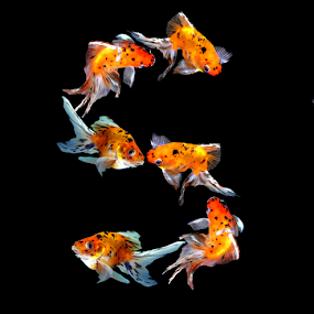 Goldfish S by Janna Morrison - Typography Single Letters ( goldfish s )