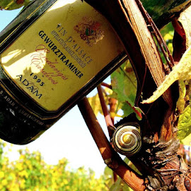 Gewurztraminer wine from Alsace France ... by Joseph Muller - Food & Drink Alcohol & Drinks ( gewurztraminer wine from alsace france ... )