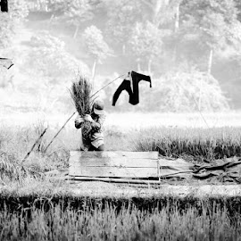 harvesting by Makarona Sitepu - People Street & Candids ( rice, black and white, indonesia, plantation, man )