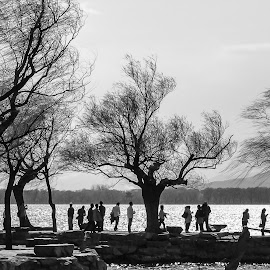 Silhouette by Ram Ramkumar - Novices Only Landscapes ( trees_silhouette, black and white, silhouette, landscape, beijing )