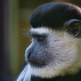 Drusillas 27/02/2015 by Dean Thorpe - Animals Other Mammals