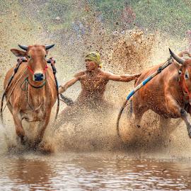 Yihaaaaaaa.. by Ed Nofri - Sports & Fitness Rodeo/Bull Riding