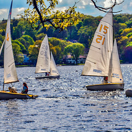 Sailboats by Steve Marra - Transportation Boats ( sailboats on upper mystic lake )