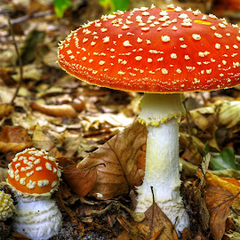 Forest fungi by Mike Bing - Nature Up Close Mushrooms & Fungi