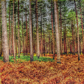 somewhere in the forest by Péter Király - Landscapes Forests ( #trees #pine #uk )