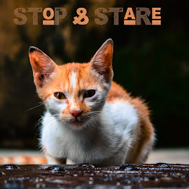 Stop n Stare by Jitaditya Ghosh - Typography Captioned Photos