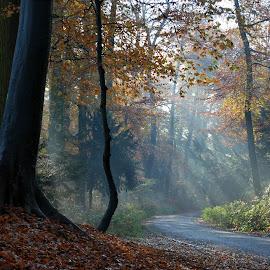 Autumn light 2 by Anita Berghoef - Landscapes Forests ( sun beams, park, nature, autumn, autumn colors, city park, light )