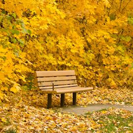 Wait by Chaithanya Krishnan - City,  Street & Park  City Parks ( mn, fall season, fall colors, park, waiting, french park, plymoth, wait, nikon d7000, natural trail, minnesota, nature, seat, fall, nikon, natural )
