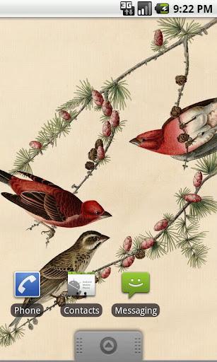 Audubon Birds Wallpapers