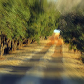 Free lensing by Amanda Coertze - Nature Up Close Trees & Bushes ( tree, landscape, free lensing,  )