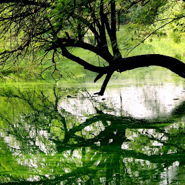 A Reflection.. by Amit Kapoor - Nature Up Close Trees & Bushes (  )