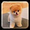 App Puppy Live Wallpaper APK for Kindle
