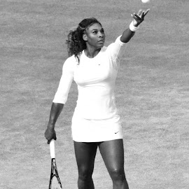 Serena Williams, Wimbledon 2014 by Sarah Bennett - Sports & Fitness Tennis