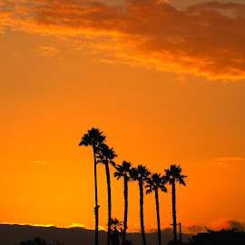 Trees on Sunset by Sanjib Paul - Nature Up Close Trees & Bushes ( nature, color, sunset, san francisco, long trees )