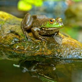 Sonny Boy II by Michael Crawley - Animals Amphibians