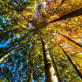 Oak Beauty by Rahul Bakshi - Nature Up Close Trees & Bushes