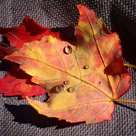Fall in New England  by Lindi Laze  - Nature Up Close Leaves & Grasses ( quincy ma )