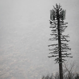 A tree by Ave Tiko - Novices Only Landscapes ( mountain, tree, autumn, fog, fall )