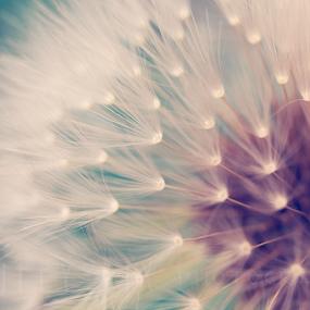Dandelion by Melanie Kern-Favilla - Nature Up Close Leaves & Grasses ( macro, dandelion, weed, floral, flower )