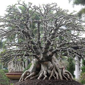 bonsai by Niraj Jha - Nature Up Close Gardens & Produce