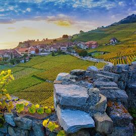 Rivaz VD, Switzerland by Kitty Bern - Landscapes Prairies, Meadows & Fields