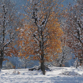 Snowing Autumn  by Adrian Per - Landscapes Weather ( colours ., winter, autumn, foliage, snow, fall )