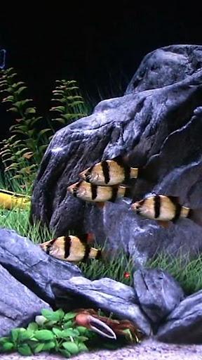 熱帶魚水族館HD