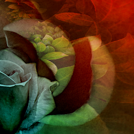 AUTUMN  by Carmen Velcic - Digital Art Abstract ( abstract, red, autumn, green, roses, flowers, digital )