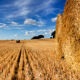 By the Bales by Ian Taylor - Landscapes Prairies, Meadows & Fields ( field, straw, summer, bales, harvest, landscape )