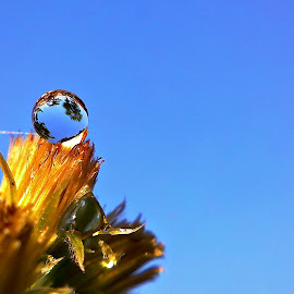 dew by Dhani Prasetya Yudhistira - Instagram & Mobile Other ( macro, dew )