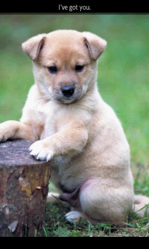 【免費書籍App】ipiks Love dogs 3 Lite-APP點子