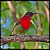Birds Photography and Detail file APK Free for PC, smart TV Download