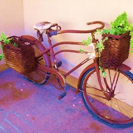 by Barbara Kauss - Transportation Bicycles