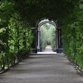 Schonbrunn - Wien by George Gacea - City,  Street & Park  City Parks ( park, nature, flowers, garden, gree )
