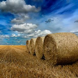 Alpacas redondas 10 by Eduardo Menendez Mejia - Landscapes Prairies, Meadows & Fields ( redondas, paja, tokina 12-24, cambridgeshire, hay, alpacas, menendez, eduardo, nikon, d5100, cambridge )