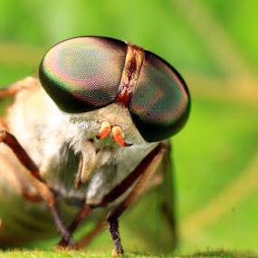 My face by Marlon Managi - Animals Insects & Spiders
