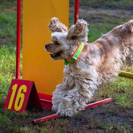 Jump by Miroslav Socha - Animals - Dogs Playing