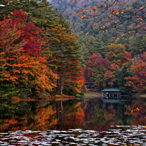 Lake Fairfield fall colors by Chris Wilson - Landscapes Mountains & Hills ( water, western north carolina, red, green, colors, fall, lilly pads, trees, lake, oranger,  )