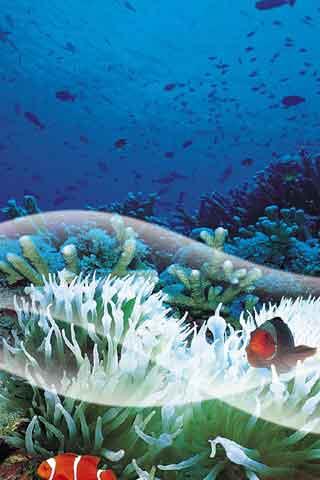 海底動態壁紙