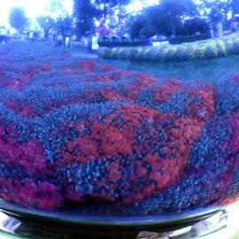 Into the Gazing Ball by Christine B. - Nature Up Close Gardens & Produce ( mum festival, gazing ball, mums, garden )