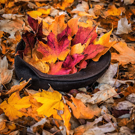 Hat Full Of Leaves by James Kirk - City,  Street & Park  City Parks ( colors, leaves, hat )