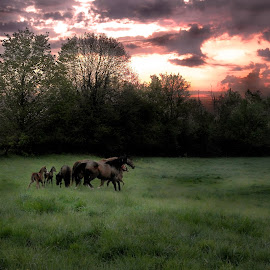 Broodmares at Dawn by Deanna Ramsay - Novices Only Landscapes ( mares, animals, dawn, horse, sunrise,  )