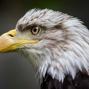 by Jean Verret - Animals Birds
