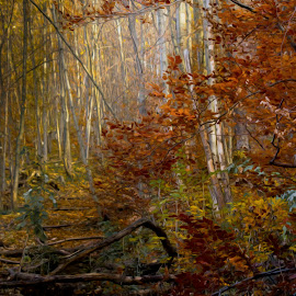 autumn painting by Constantin Hurghea - Landscapes Forests ( colour, autumn, trees, light, painting, brasov )